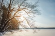 Quadro winter landscape with lake and forest in scandinavia