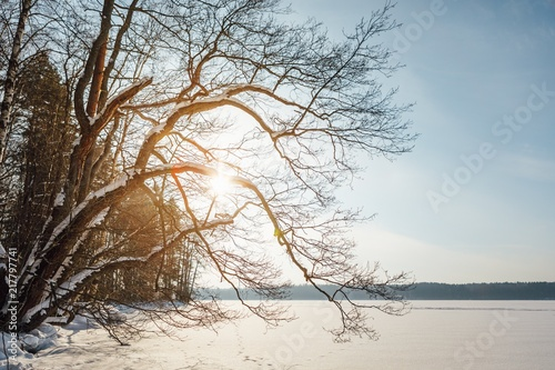 In de dag Landschappen winter landscape with lake and forest in scandinavia