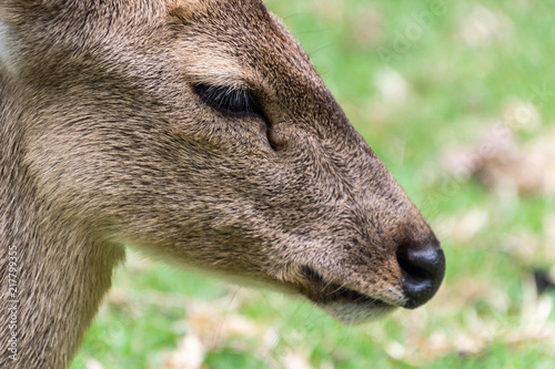 Foto Spatwand Thailand Close up of deer heaad.