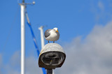 Seagull at lantern in the marina of the Swedish fishing town Stromstad - 217815356