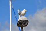 Seagull at lantern in the marina of the Swedish fishing town Stromstad - 217815360