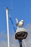 Seagull at lantern in the marina of the Swedish fishing town Stromstad - 217815367