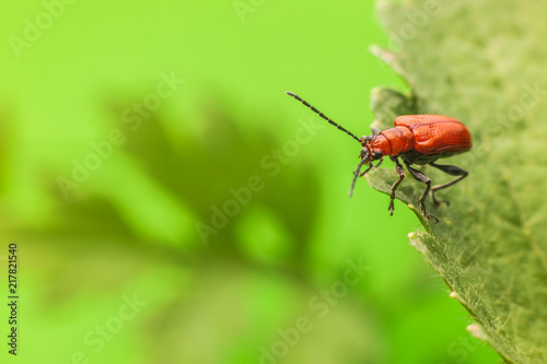 Foto Murales Macro photography insects