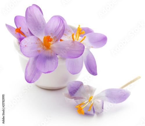 Wall mural Saffron crocus flower