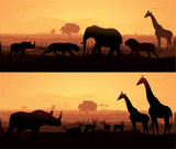Wild Animals in a beautiful evening