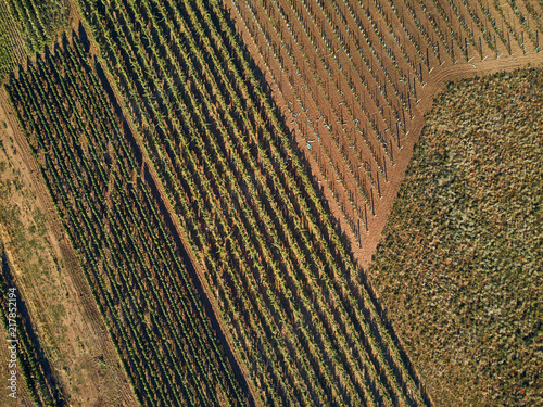 In de dag Natuur Aerial view of green fields and vineyard with natural light, Czech Republic