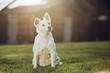 Portrait of old dog