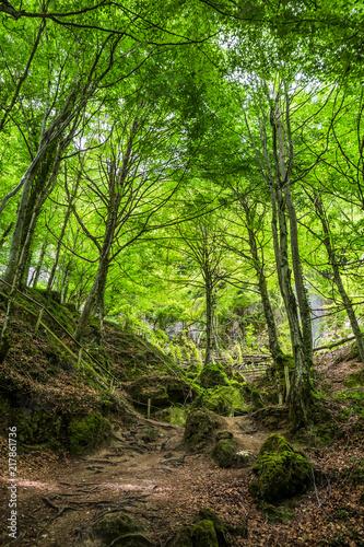 Fotobehang Weg in bos Camino por un bosque frondoso