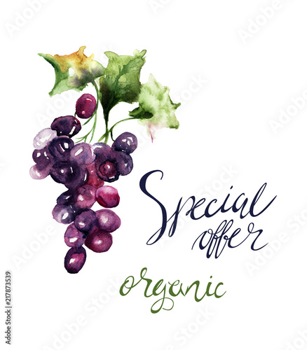 Watercolor illustration with grape cluster