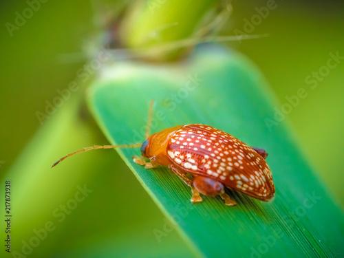 Foto Murales bugs