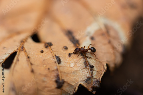Foto Murales Close Up of an Ant on a Yellow Leaf