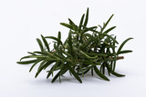 Rosemary branches isolated on white background - 217892379