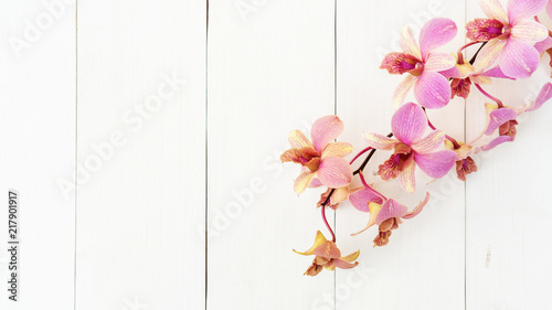 Purple orchid flower on a white wooden table. - 217901917