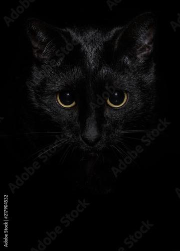 Foto Spatwand Kat The black cat