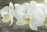 White Orchid flowers on wooden rustic background