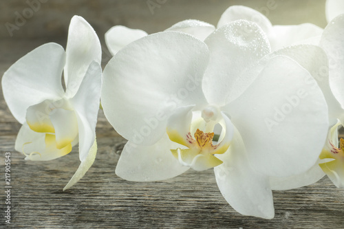 White Orchid flowers on wooden rustic background - 217905543