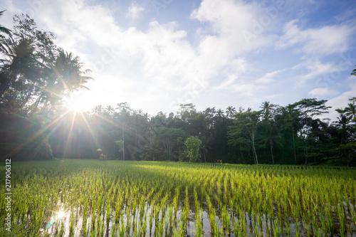 Canvas Zomer Tegalalang rice fields, Ubud, Bali