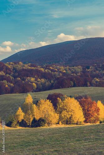 Fotobehang Herfst Bright colorful atumn color trees
