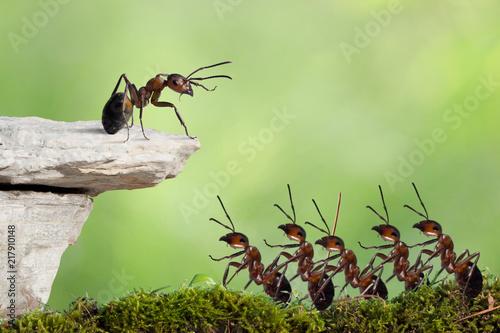 Foto Murales Crowd of red ants, speaker, protesting