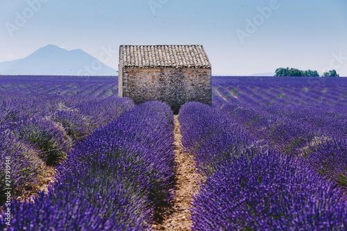 maison typique provençale dans un champ de lavande