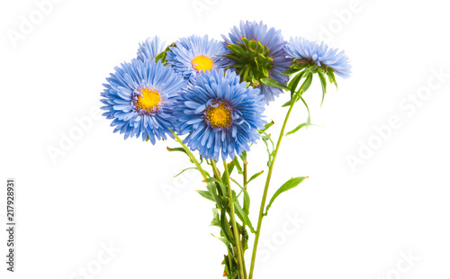 Wall mural blue aster isolated