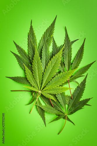 Green cannabis leaves. - 217932568