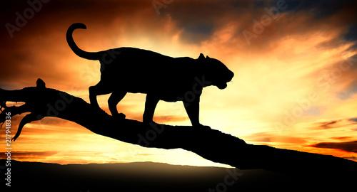 Foto Spatwand Panter silhouette of leopard on tree