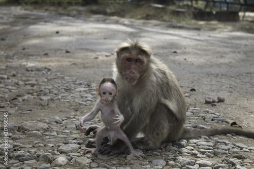 Foto Spatwand Aap Monkey and Baby