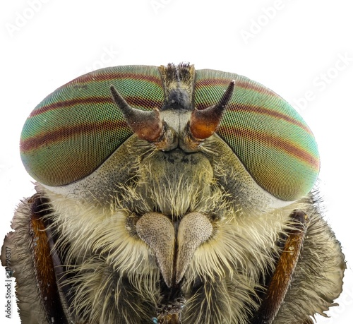 Foto Murales Gadfly. Head with big eyes, mustache and paws, close-up, white background.
