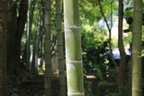 竹の節(節間)