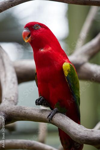 Aluminium Papegaai KL Bird Park