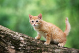 red tabby kitten posing on a tree outdoors