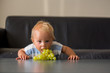 Quadro Baby boy, child, eating grape at home in living room