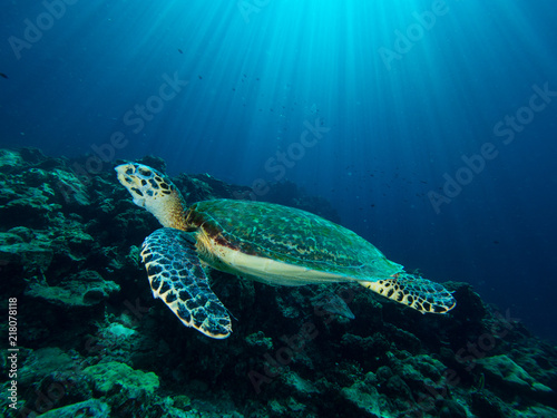 Foto Spatwand Thailand Hawksbill turtle on a coral reef with sun rays beaming down in the background