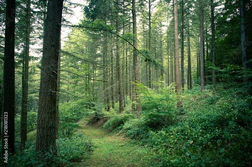Fotobehang Weg in bos Bosweg met een mystieke sfeer
