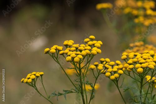 Foto Murales Blume