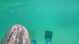 UNDERWATER swimming backwards with flippers in clear turquoise water - 218098383