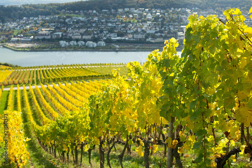 In de dag Wijngaard Rhine valley with vineyards