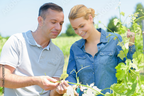 Man and woman inspecting leaves of grape vine