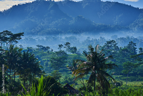 In de dag Rijstvelden Landscape of green terraced rice field at countryside with beautiful fog around mountain. Nature background. Peaceful tropical landscape with palms and green rice field. Asian agricultural lifestyle.