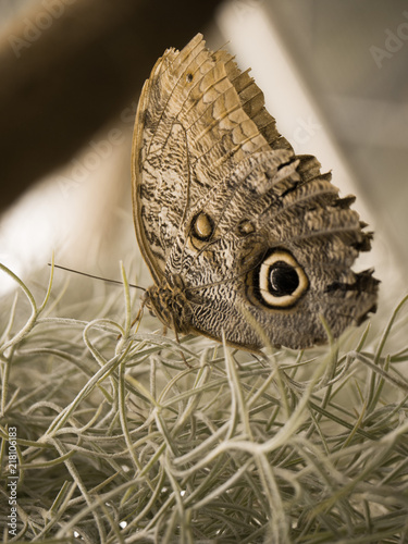 Canvas Vlinder bunt