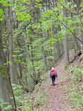 Wandern zwischen Wannbach und Ühleinshof
