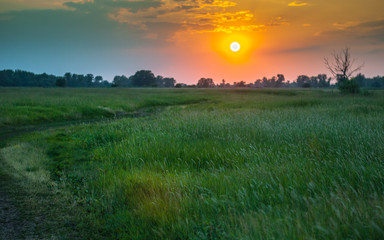 A dirt road leading among tall grasses photographed at sunset