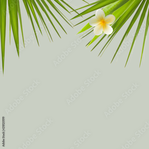 Tropical flower and palm leaves on light green background