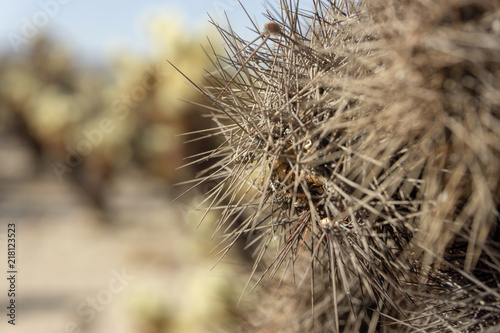 Canvas Paardenbloemen dry cactus