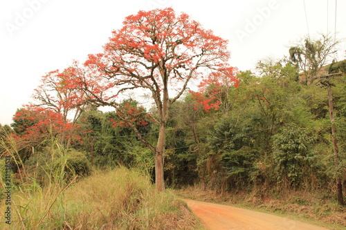 Fotobehang Herfst Brazil - landscape & flowers
