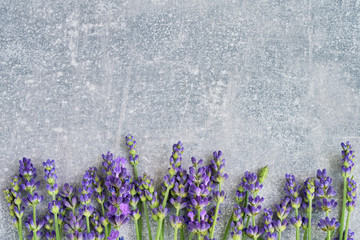 Lavender flowers on gray background. Copy space, top view. Summer background. Copy space, view from above