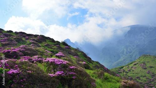 In de dag Azalea 雲がかかる阿蘇の山並みとツツジの絶景