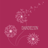 DANDELION. Flying in the wind, the parachutes. Logo, emblem. The word and the silhouette of a dandelion on a red background. Flying parachutes of a dandelion Dark border words and bright colors.