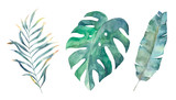 Watercolor tropical leaves set. Hand drawn illustration. Isolated image - 218168989